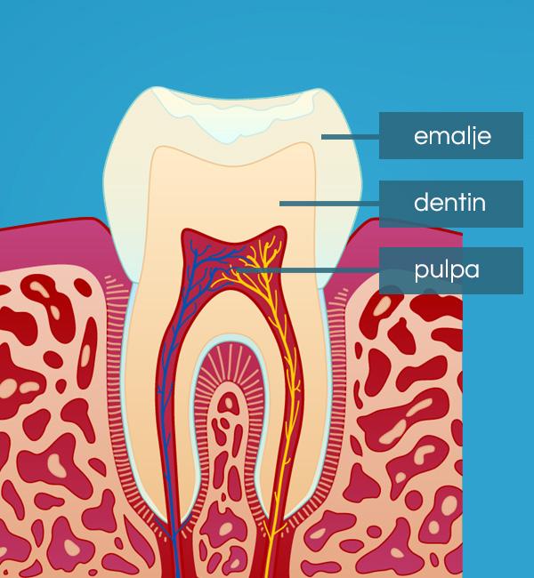Bilde av hvordan en tann er satt sammen